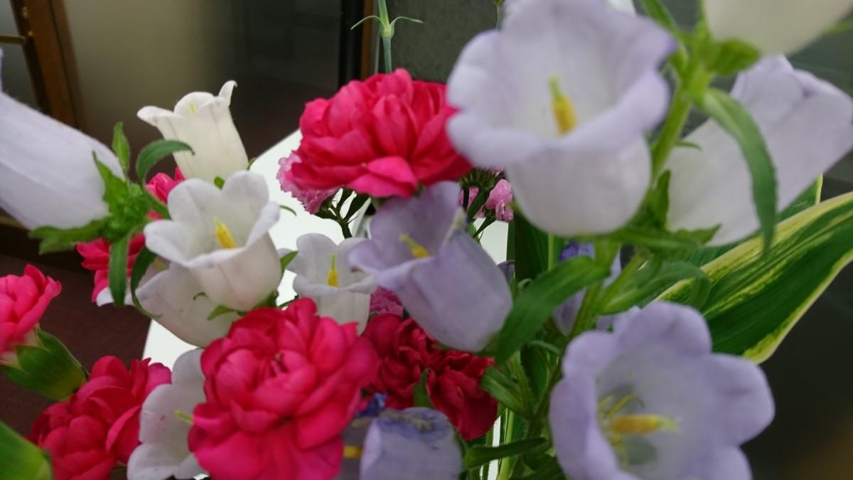 ☆今日のオ~タ☆  今週のお花!釣鐘草