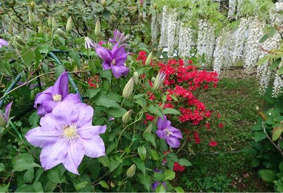 ◇今週のお花◇ 令和も宜しくお願いします!