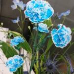 ◇今週のお花◇ 青