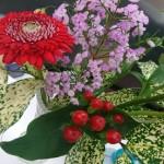 ◇今週のお花◇ ヒメヒゴダイ!