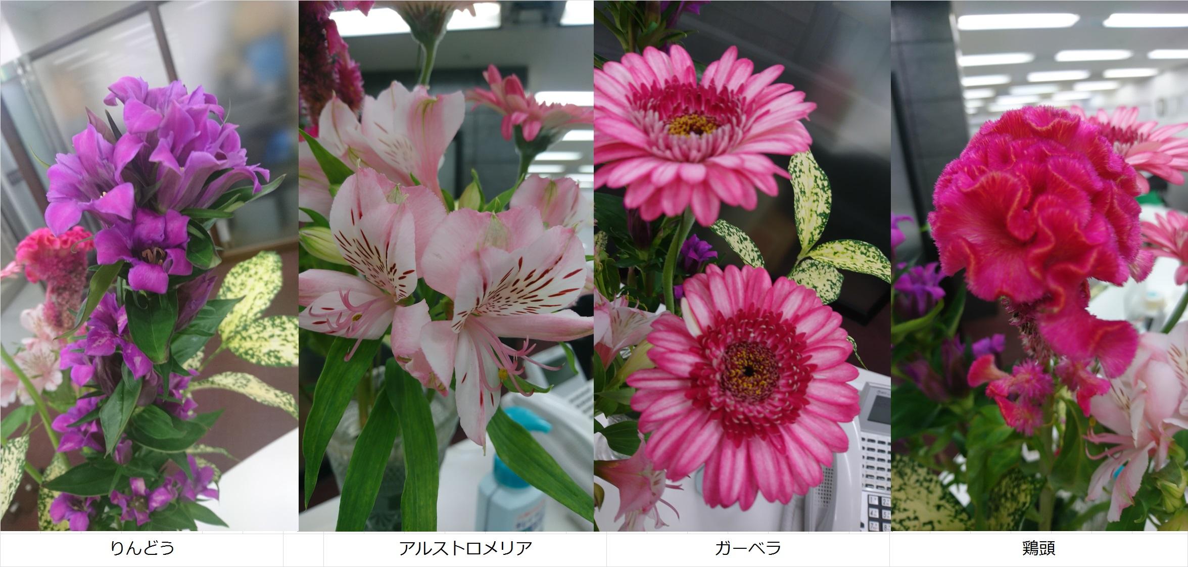 011017お花
